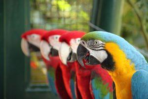 vogel voliere kaufen, vogelvoliere kaufen